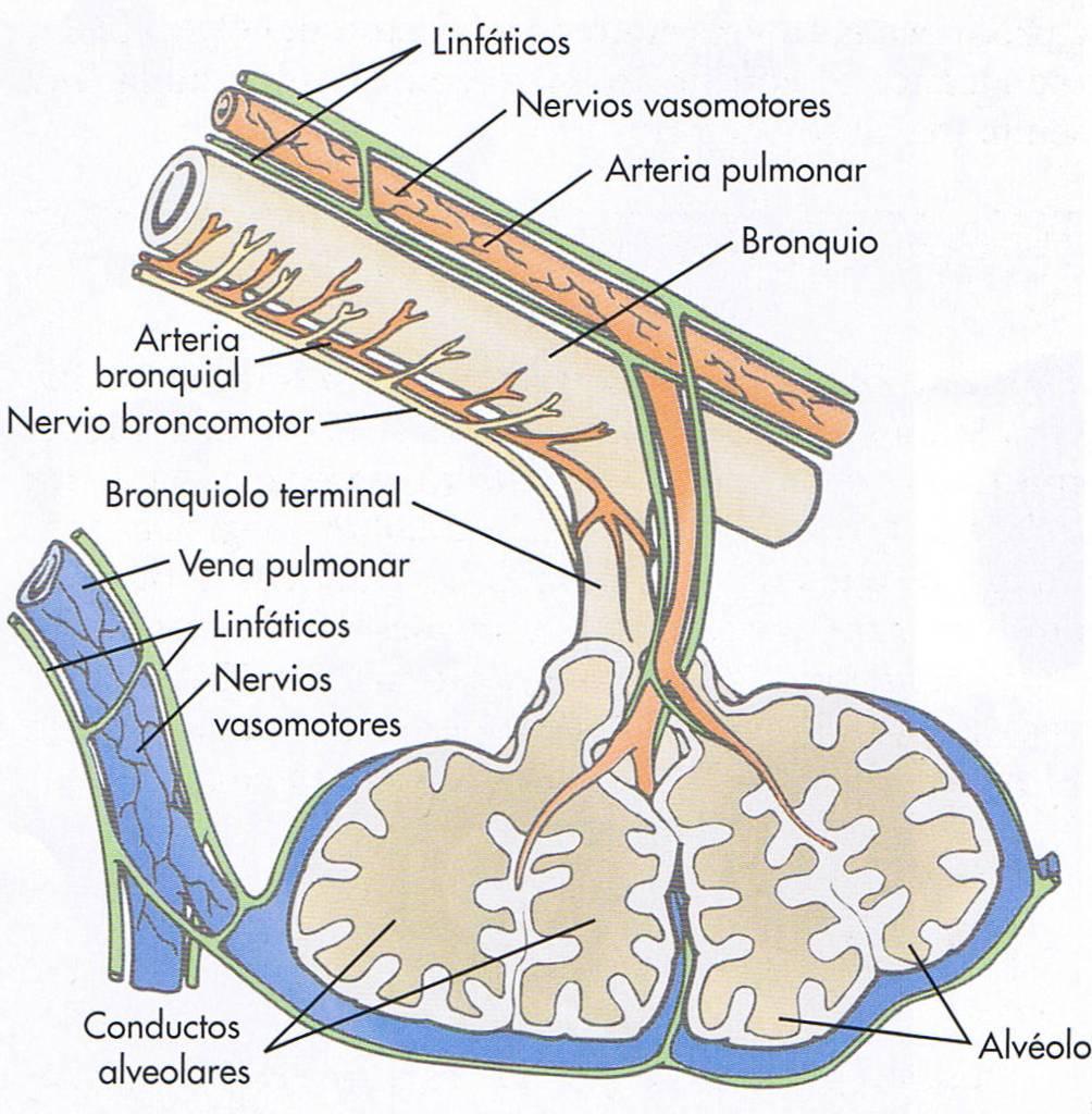 Trastornos de la Ventilación – Respiralivio